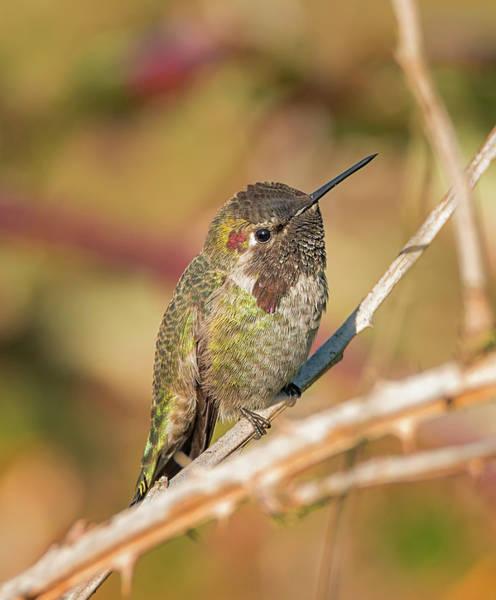 Photograph - Hummingbird Close Up by Loree Johnson