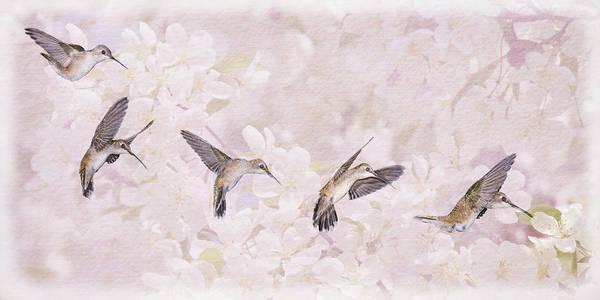 Photograph - Hummingbird Flight Sequence I by Leda Robertson