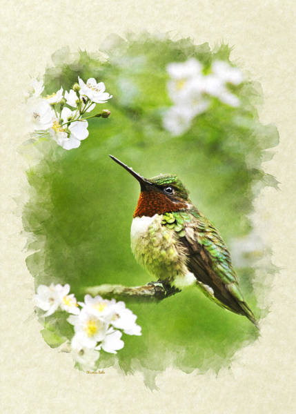 Mixed Media - Hummingbird Flora And Fauna Blank Note Card by Christina Rollo