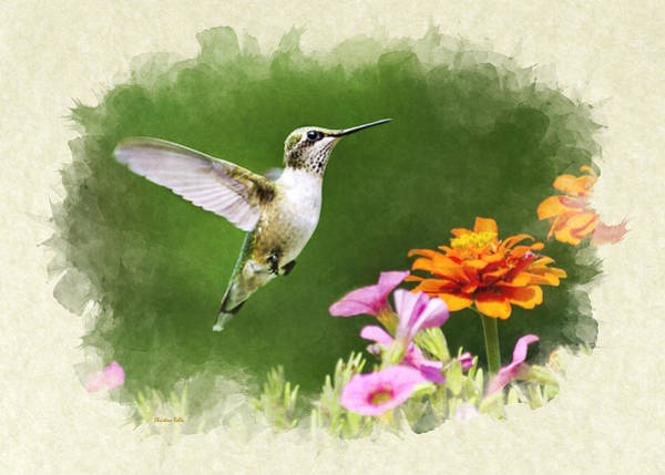 Photograph - Hummingbird Flying With Flowers Blank Note Card by Christina Rollo