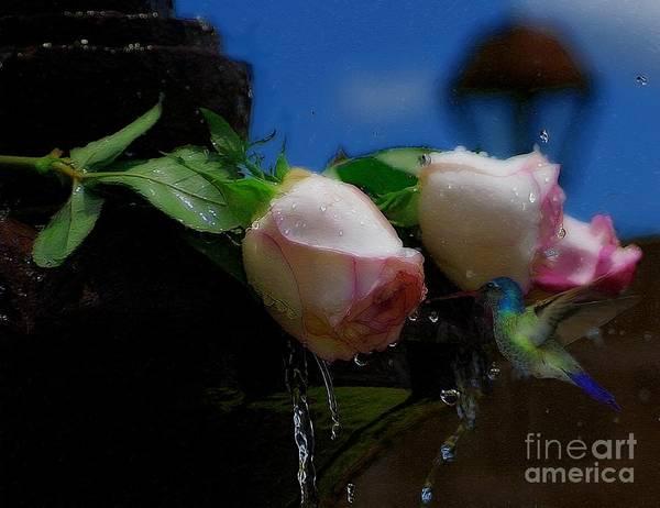 Photograph - Hummingbird Fountain by John  Kolenberg