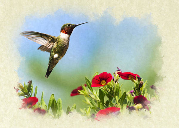 Mixed Media - Hummingbird Frolic Blank Note Card by Christina Rollo