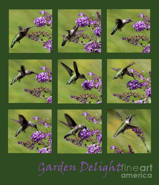 Photograph - Hummingbird Garden Delight Green by Karen Adams