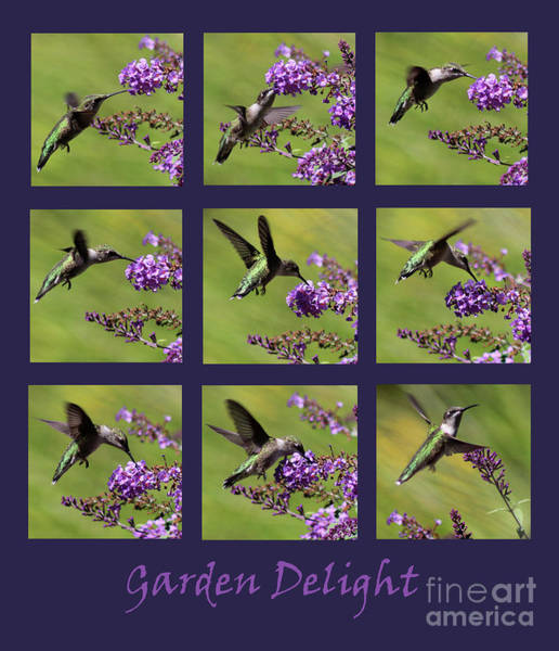 Photograph - Hummingbird Garden Delight Purple by Karen Adams