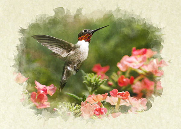 Photograph - Hummingbird Garden Jewel Blank Note Card by Christina Rollo