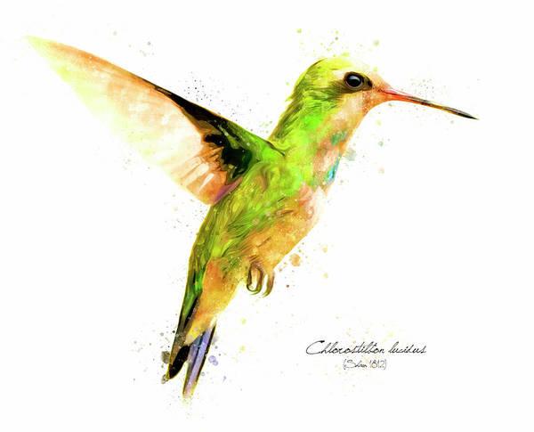 Digital Art - Hummingbird I by Geronimo Martin Alonso