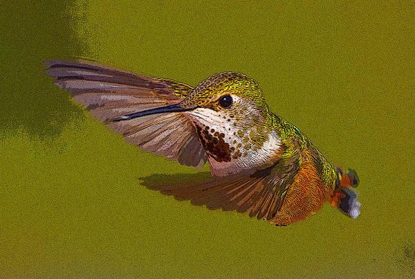 Selasphorus Photograph - Hummingbird In Flight- Abstract by Tim Grams