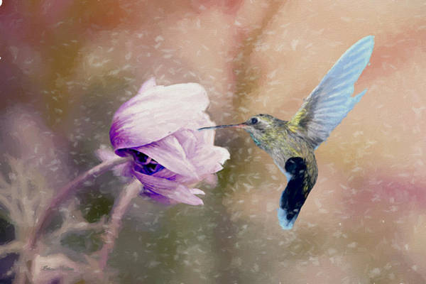 Photograph - Hummingbird In The Snowstorm by Ericamaxine Price