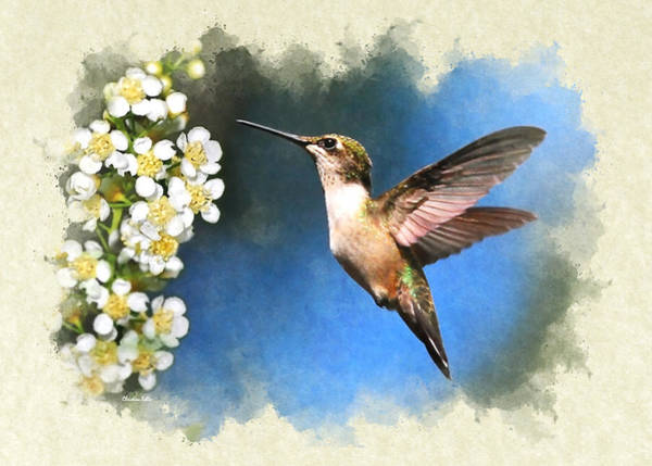 Mixed Media - Hummingbird Just Looking Blank Note Card by Christina Rollo