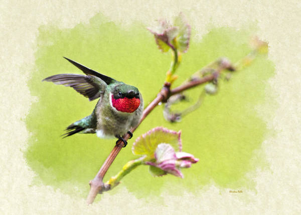 Photograph - Hummingbird Let's Fly Away Blank Note Card by Christina Rollo