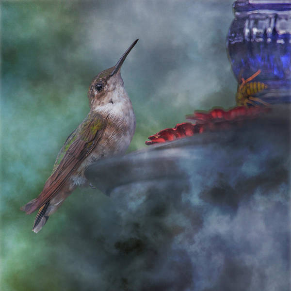 Hummingbird Wings Photograph - Hummingbird Mystic Mist by Betsy Knapp