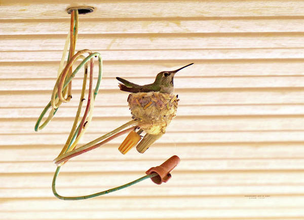 Photograph - Hummingbird Nest In Wires by Carl Deaville