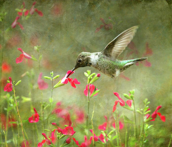Wall Art - Photograph - Hummingbird Oasis by Angie Vogel