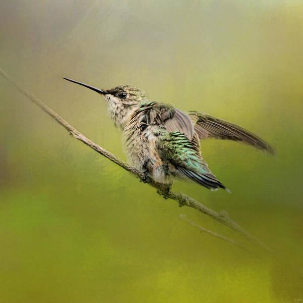 Photograph - Hummingbird On Lime by Jai Johnson