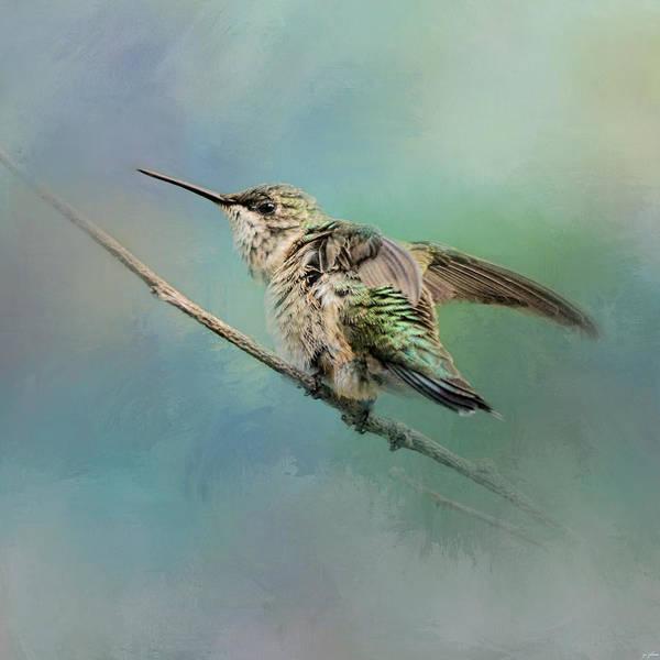 Photograph - Hummingbird On Mint by Jai Johnson