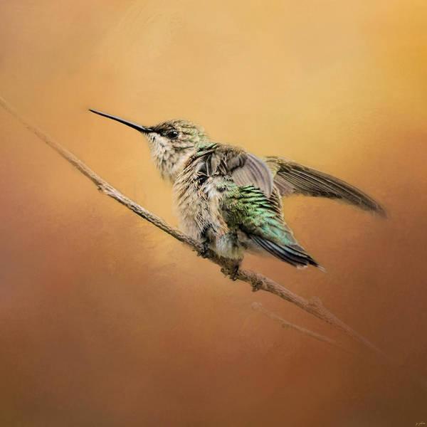Photograph - Hummingbird On Peach by Jai Johnson