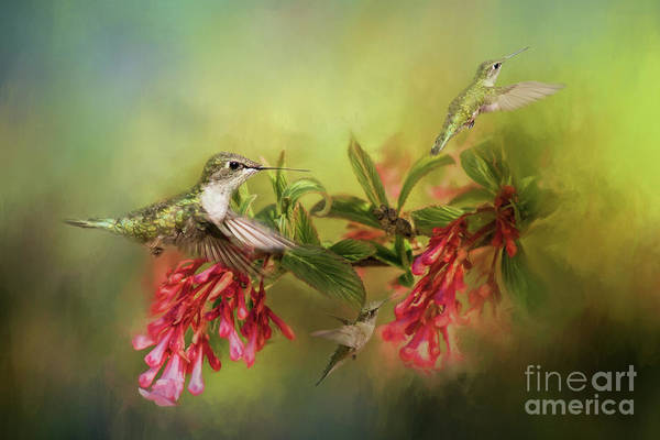 Photograph - Hummingbird Paradise by Pam  Holdsworth