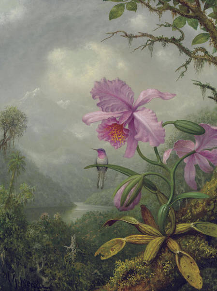 Humming Bird Wall Art - Painting - Hummingbird Perched On An Orchid Plant by Martin Johnson Heade