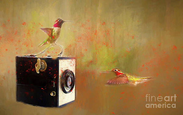 Wall Art - Photograph - Hummingbird Photo Shoot by Darren Fisher