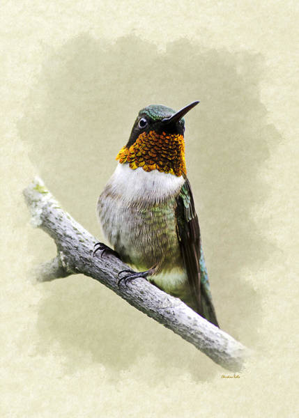 Mixed Media - Hummingbird Portrait Blank Note Card by Christina Rollo