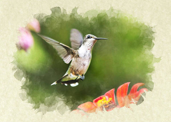 Mixed Media - Hummingbird Shimmering Breeze Blank Note Card by Christina Rollo