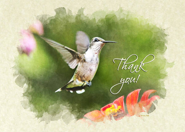 Photograph - Hummingbird Shimmering Breeze Thank You Card by Christina Rollo