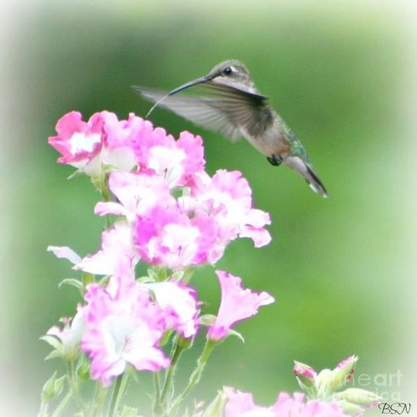 Photograph - Hummingbird Sip by Barbara S Nickerson