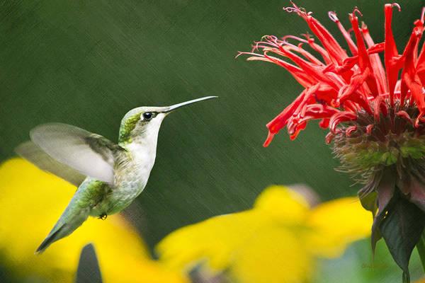 Fast Mixed Media - Hummingbird Snack by Christina Rollo