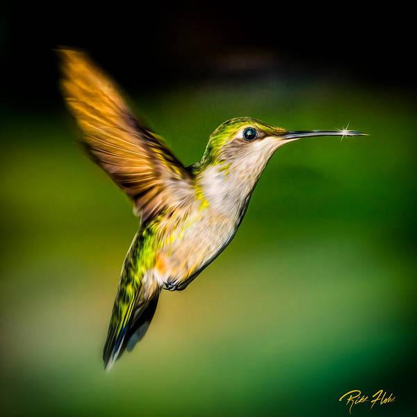 Photograph - Hummingbird Sparkle by Rikk Flohr