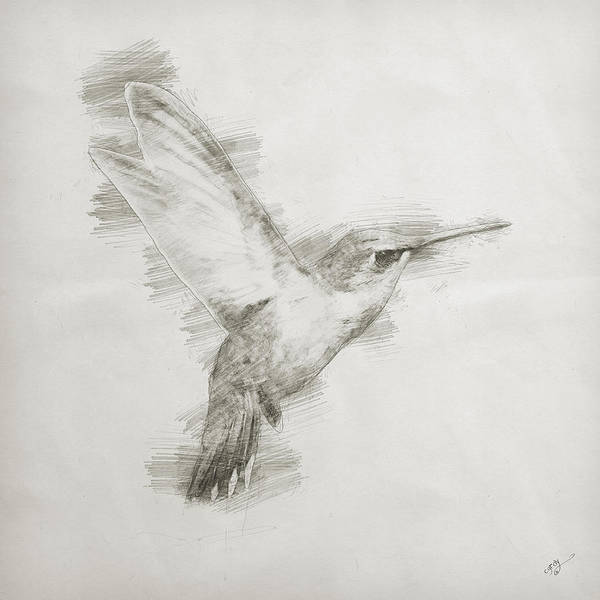 Wall Art - Digital Art - Hummingbird Study by Cameron Gray