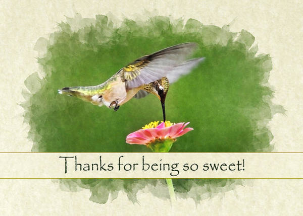 Photograph - Hummingbird Sun Sweet Thank You Card by Christina Rollo