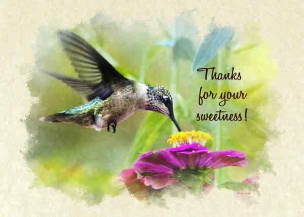 Photograph - Hummingbird Sweetness Thank You Card by Christina Rollo
