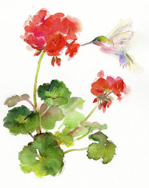 Red Geraniums Wall Art - Painting - Hummingbird With Geranium by John Keeling