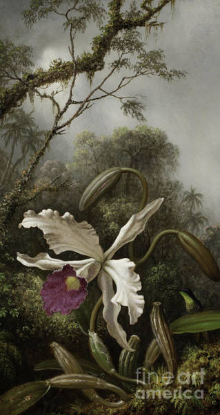 Rain Forest Painting - Hummingbird With White Orchid by Martin Johnson Heade
