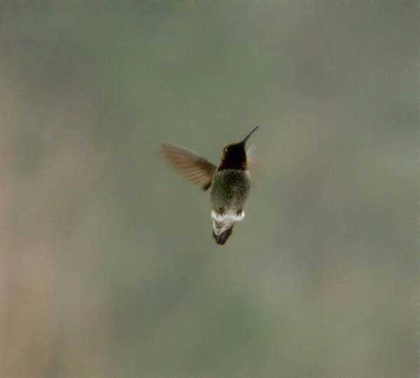 Photograph - Flying High by Marilyn Wilson