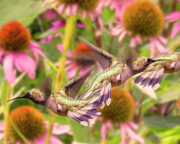Hummingbird Feeder Photograph - Hummingbirds Autumn Is Near by Betsy Knapp