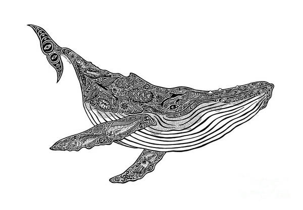 Wall Art - Drawing - Humpback by Carol Lynne