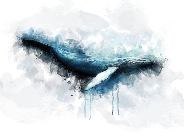 Mamal Digital Art - Humpback Whale by Aged Pixel