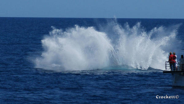 Encounter Bay Photograph - Humpback Whale Breaching Close To Boat 23 Image 3 Of 4 by Gary Crockett