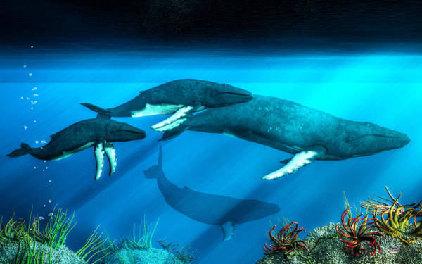 Digital Art - Humpback Whales by Daniel Eskridge
