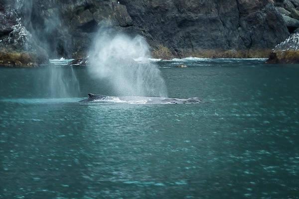 Photograph - Humpback Whales Spouting by Belinda Greb