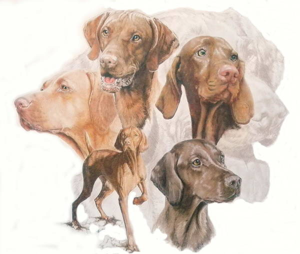 Wall Art - Mixed Media - Hungarian Vizsla Medley by Barbara Keith