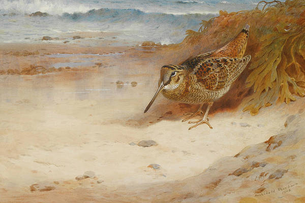 Bird Watercolor Mixed Media - Hungry And Homeless By Thorburn by Archibald Thorburn