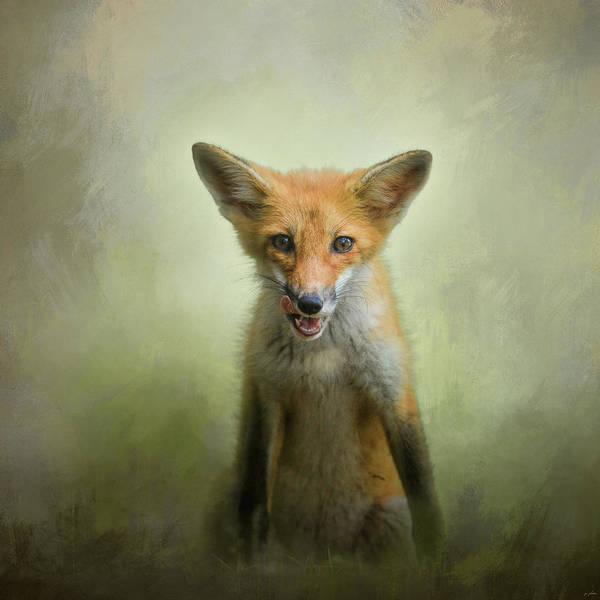 Photograph - Hungry Fox by Jai Johnson