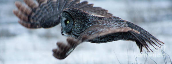 Photograph - Hunter On Wings by Katie LaSalle-Lowery