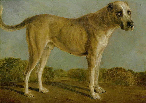 Painting - Hunting Dog by Celestial Images