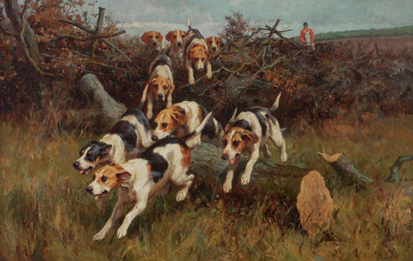 Beagle Painting - Hunting Scenes by lfred Duke