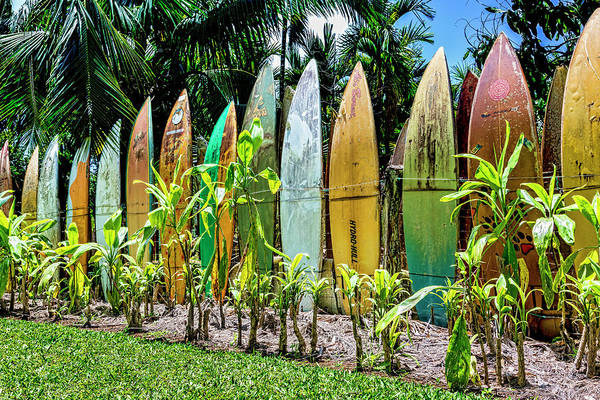 Surfboard Fence Photograph - Hurricane Barrier by Kelley King