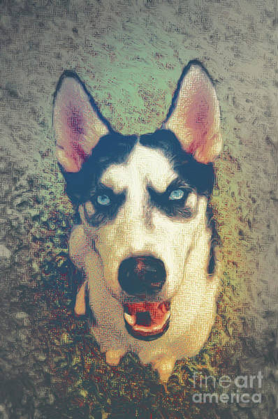 Husky Mixed Media - Husky Modern by Angela Doelling AD DESIGN Photo and PhotoArt