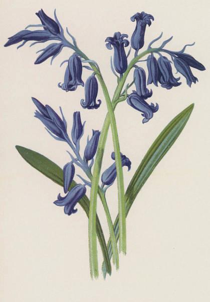 Wall Art - Painting - Hyacinth by Frederick Edward Hulme